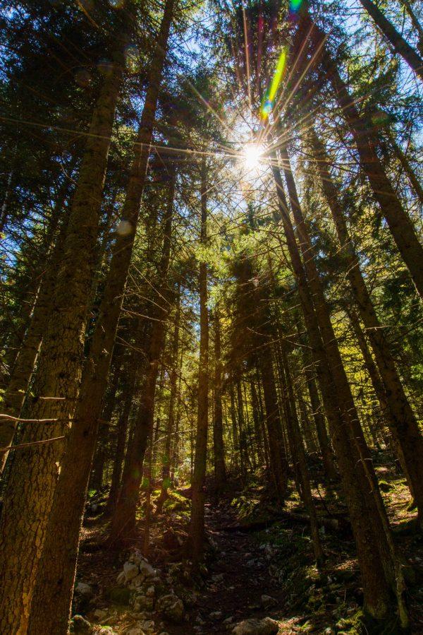 Le soleil du printemps perce les forêts du massif de Chartreuse