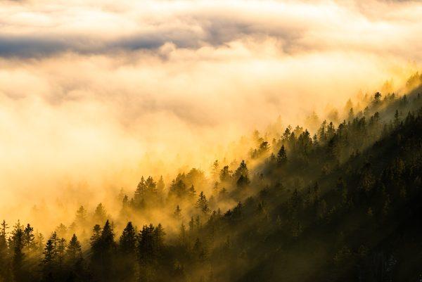 Soleil d'hiver sur les forêts de Belledonne