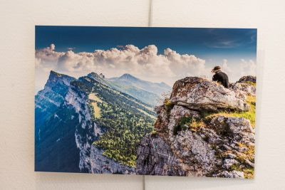Tableau photo rigide en vente