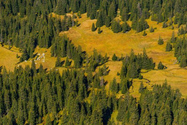 Forêt et marécage de montagne