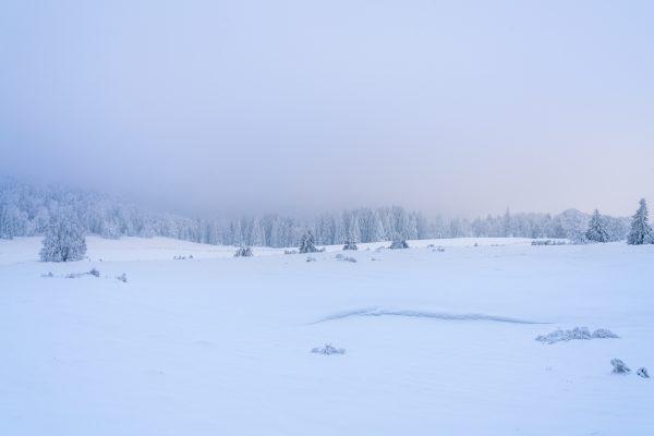 Ambiance hivernale dans les prairies enneigées du Vercor
