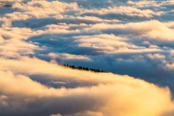 mer de nuages et sapins